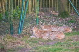 Tiere im Tierpark Essehof